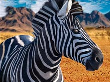 Zebra Hunter